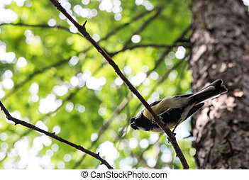 bird sitting on a tree branch