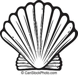 seashell sea shell