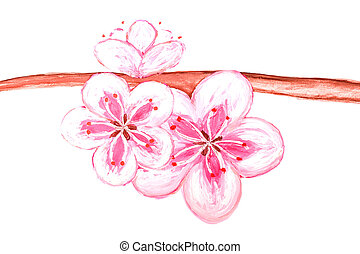 Blossom sakura drawing of the paint - isolated on white background