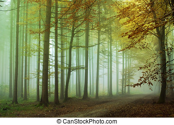 Foggy forest - A lonely road in the forest with fog around...