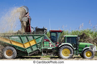 harvesting sugar cane Australia - harvesting sugar cane in...