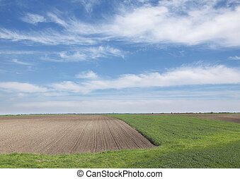 Agriculture - Wheat field and cultivated land in spring