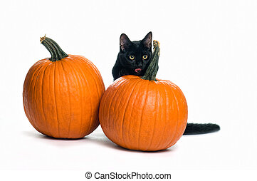 black cat with pumpkins - black cat with two pumpkins on a...