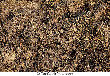 Dung - Close up  of cow dung in field