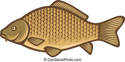 carpa, peixe, (Common, carp)