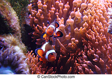 nemo fishes as very nice natural background
