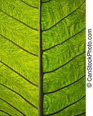 leaf construction - macro image showing the underneath side...