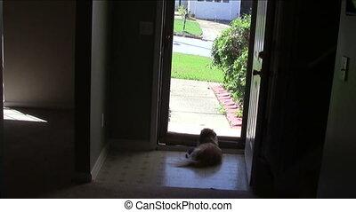 Dog Watching Door - Dog watching out through front door