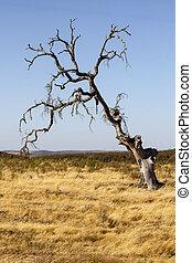 dead tree on dry land