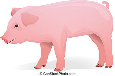 Realistic pig illustration - Isolated pink pig cartoon