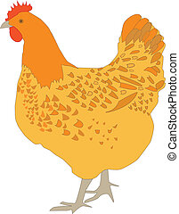 Hen  - Vector illustration of hen