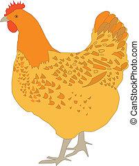 Hen  - Vector illustration of hen