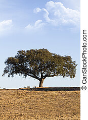 lonely tree - View of a lonely tree on a arid land in the...