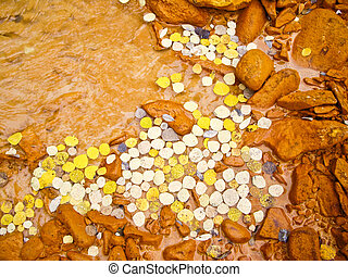 Yellow aspen leaves float in muddy river in Fall