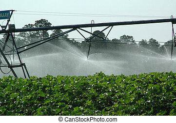 Pivot watering of crops - Photographed here on a farm in...