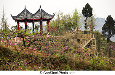 Pagoda Peach Trees China
