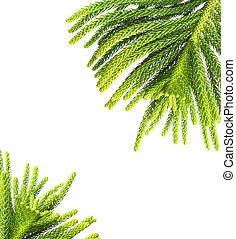 Beautiful green fir border