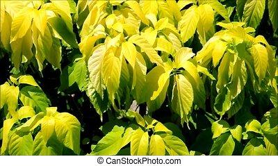 Leaves on Wind against