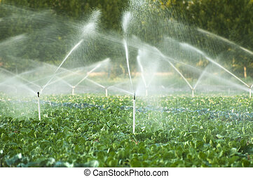 Irrigation systems in a vegetable garden - Irrigation...
