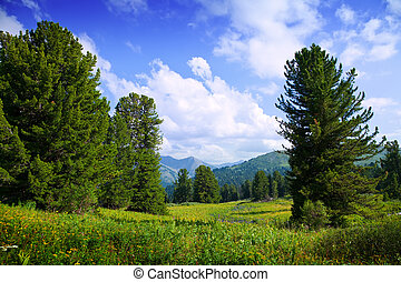 Landscape with forest mountains