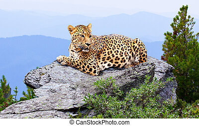 leopard in wildness area
