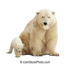 polar bear with baby Isolated over white background with...
