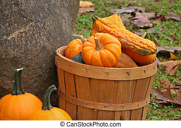 Gourds in Basket - Close-up of orange gourds in basket near...