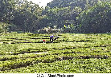 Farmer working at farmland
