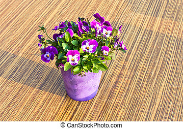 Colorful flowers in a pot on table