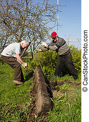 two men work in garden