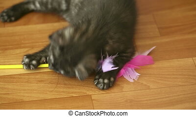 Playful kitten.