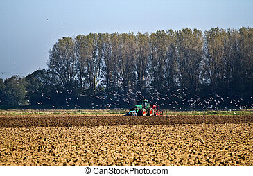 Agriculture - Tractor plough up the field - Tractor plough...