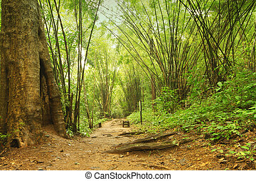 a walking path in a bamboo forest