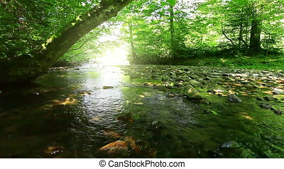 forest river - pure fresh water waterfall in forest