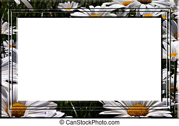 Daisies portrait frame - White daisies portrait frame for...