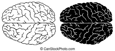 Human brain - Two brains, normal and black white version