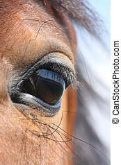 Brown horse eye - Brown horse with black mane eye close up