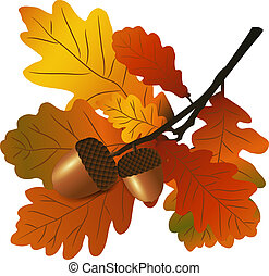 Oak branch with acorns. There is an option in the vector.