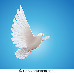 white dove - Vector illustration of beautiful shiny white...