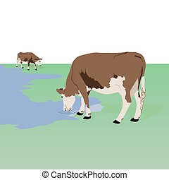 Cows at the watering