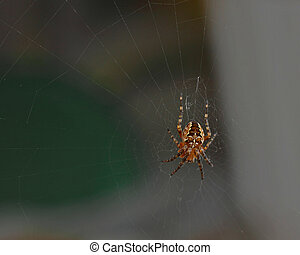 Spider web - Cross tee spider Araneus diadematus in his web...