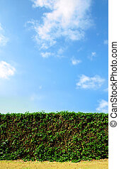 Clean cut hedge against a bright blue sky