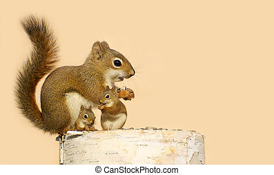 Mother and baby squirrels. - Cute image of a mother squirrel...