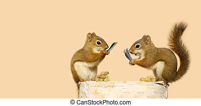 Squirrels playing cards. - Fun image of two baby squirrels...