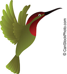 hummingbird - vector illustration of hummingbird