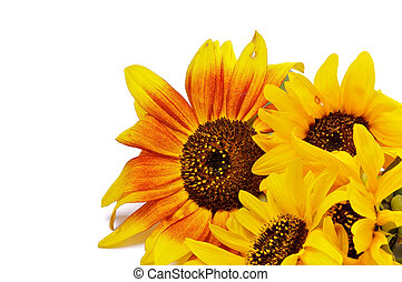 Beautiful Sunflowers - Frame of Beautiful Sunflowers closeup...
