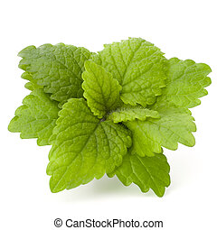 Peppermint or mint bunch isolated on white background cutout...