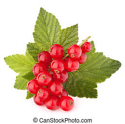 Red currants and green leaves still life isolated on white...