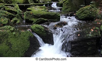 Flowing stream in the forest
