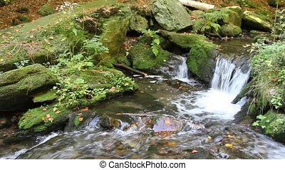 Peaceful flowing stream in the forest Czech Republic